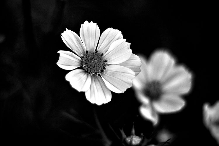 Botanical Monochrome 5414 - flowerphotography - dorian-stretton | ello