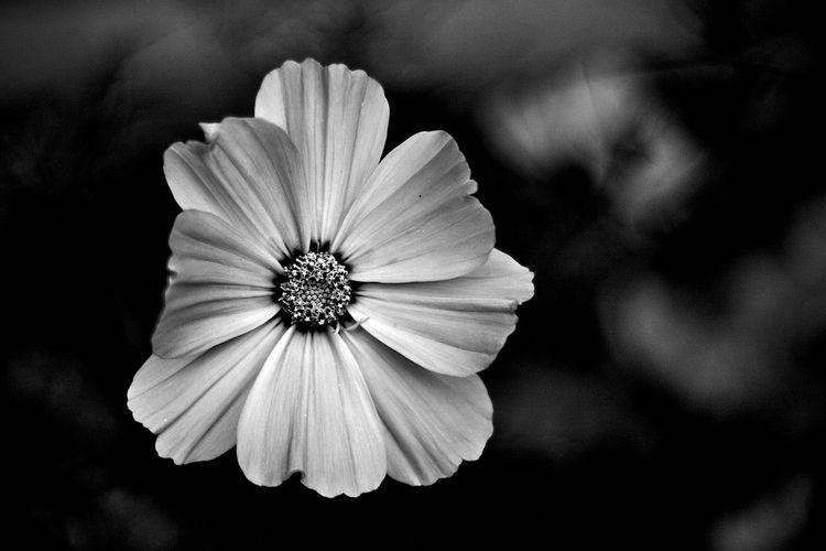 Botanical Monochrome 5415 - flowerphotography - dorian-stretton | ello