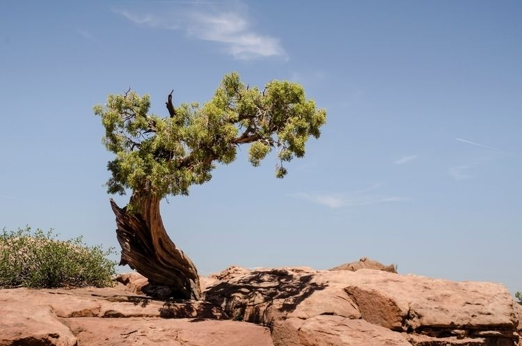 Tree - tree, nature, deadhorsepoint - cnphoto1 | ello