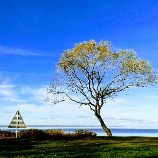 1 South Wättern.se af ♡ Mitt - Tree - mellyrn | ello