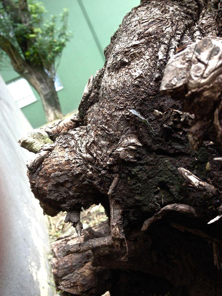 Thundercat (Felo Barrio - Rudos: - dairocervantes | ello