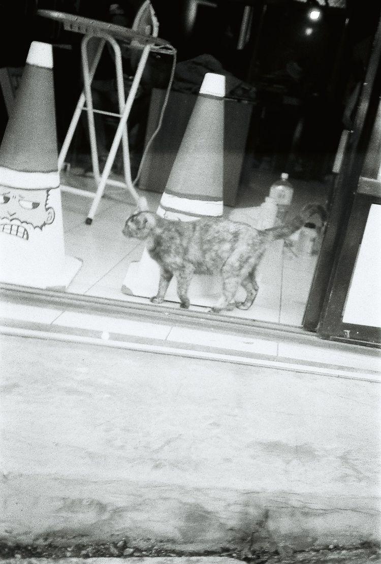 cat, streetphoto_bw, streetphotography - kendou0508 | ello