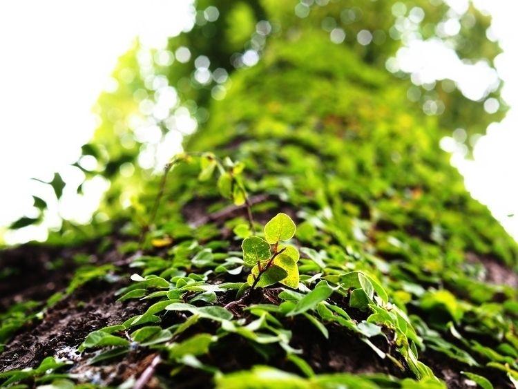 tree, plant, olympus - barchor | ello