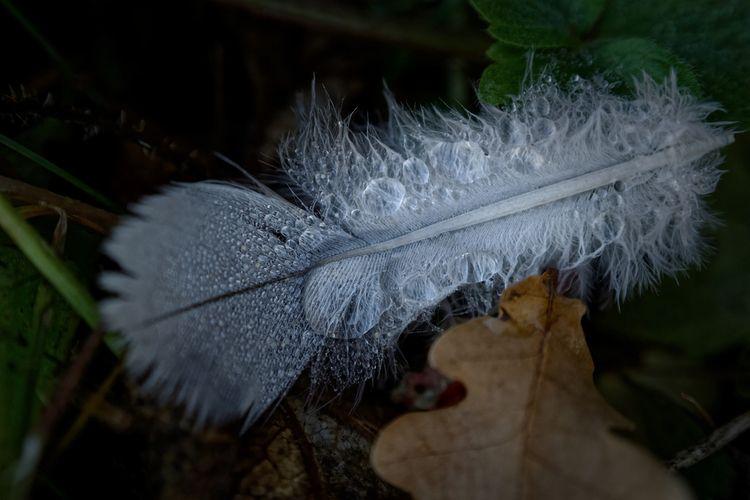 Lenses - photography, feather, fall - marcushammerschmitt | ello
