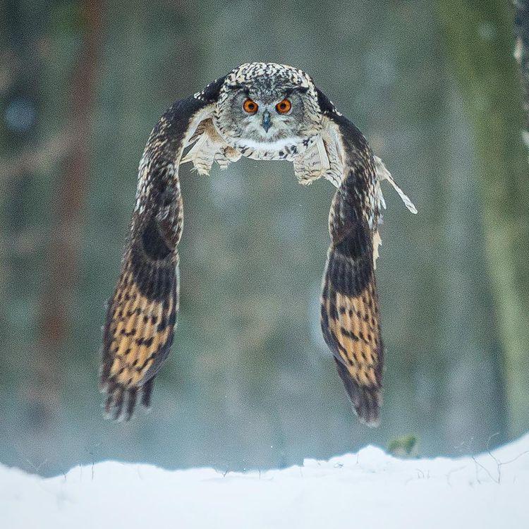 Incredible Bird Photography War - photogrist | ello