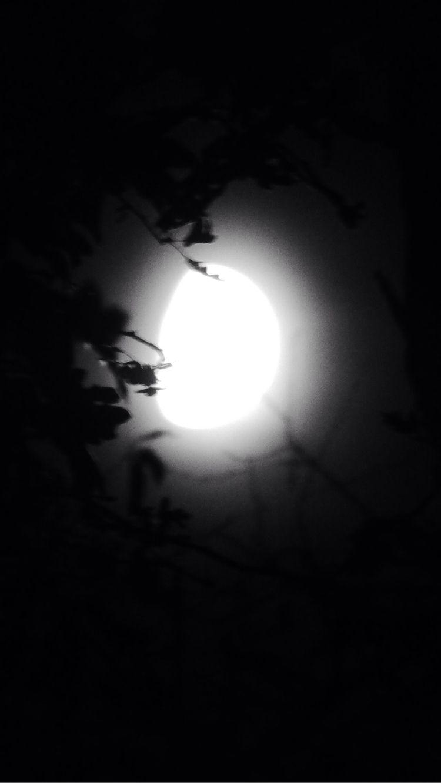 moon trees - Panasonic, Lumix - paulbines | ello