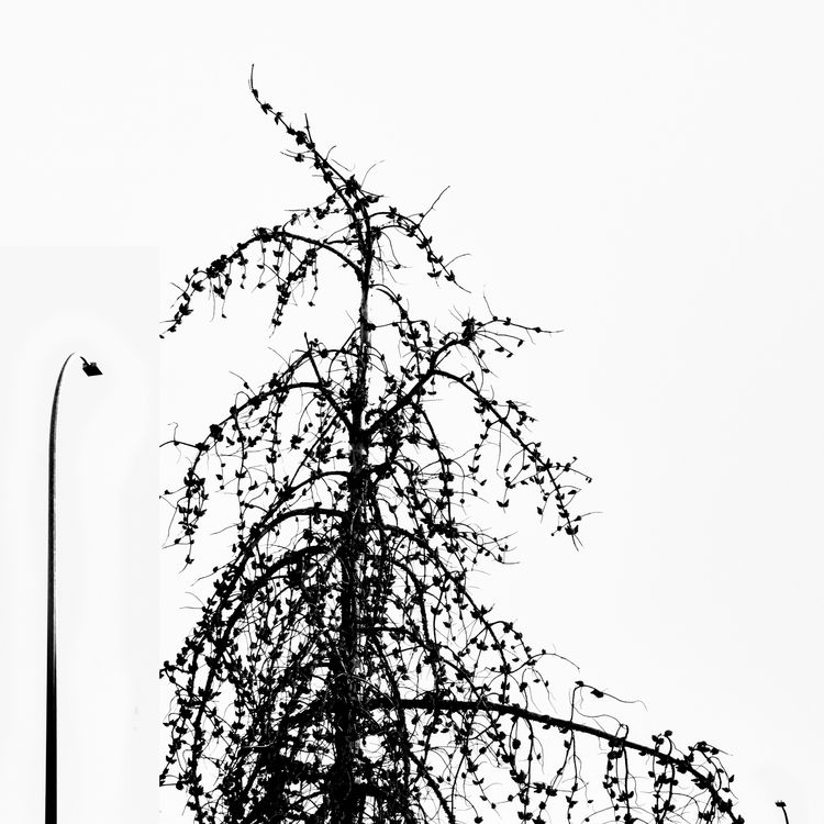Freeway Larch - monochrome, elloblackandwhitephotography - jeff_day | ello