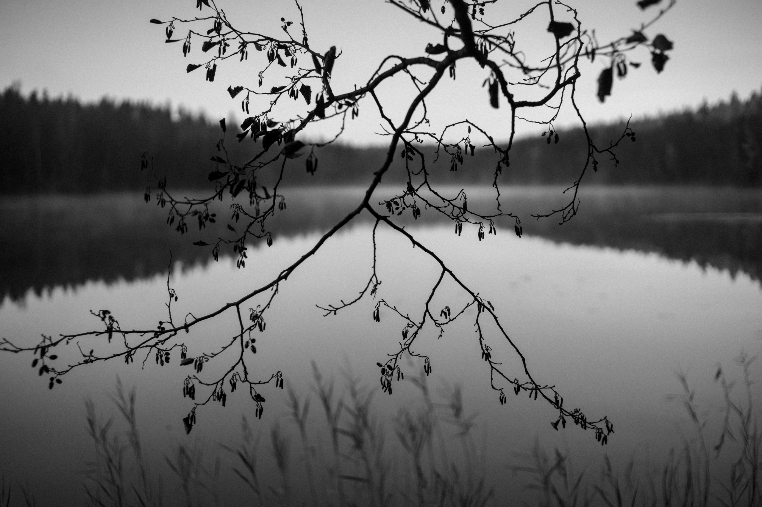 Lake Nuuksio national park, Fin - amiett | ello