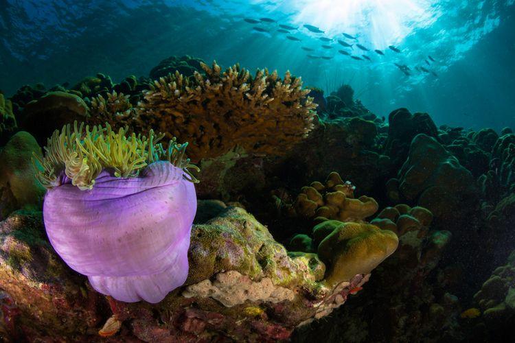 La plongée à Bali est autre mon - atlantisbalidiving | ello
