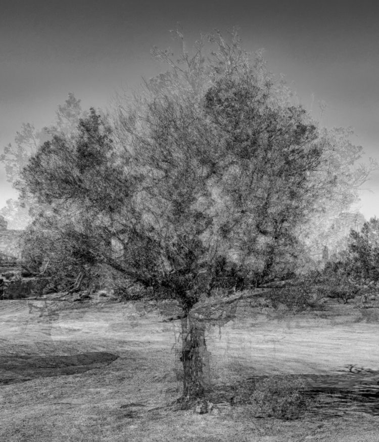 trees losing leaves, worried - multipleexposure - bkleemann | ello