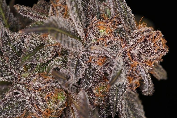 Grape Ape Cannabis - carlallened | ello