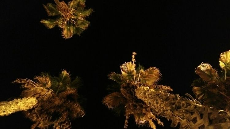 night. typical views Valencia,  - lune_ | ello