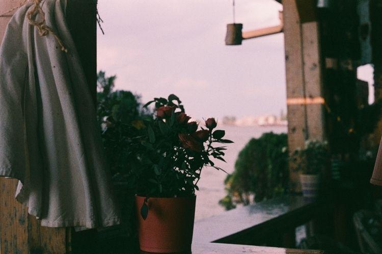 danubecurtain, autumnday, autumnondanube - odoljen   ello