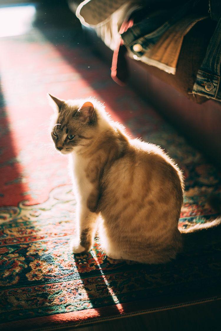 cat, silhouette, dark, tone, tones - oanceaalex | ello