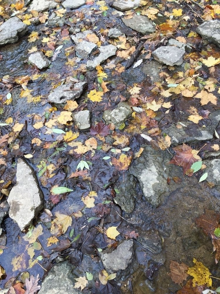 nature, fall, iPhone, photography - pictorific | ello