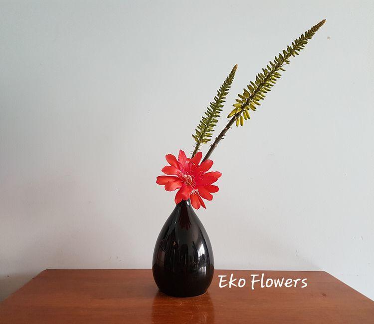 ikebana, epiphyllum, aloevera - ekoflowers   ello