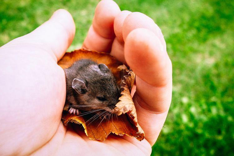 met friend field week, small me - leafinglife | ello
