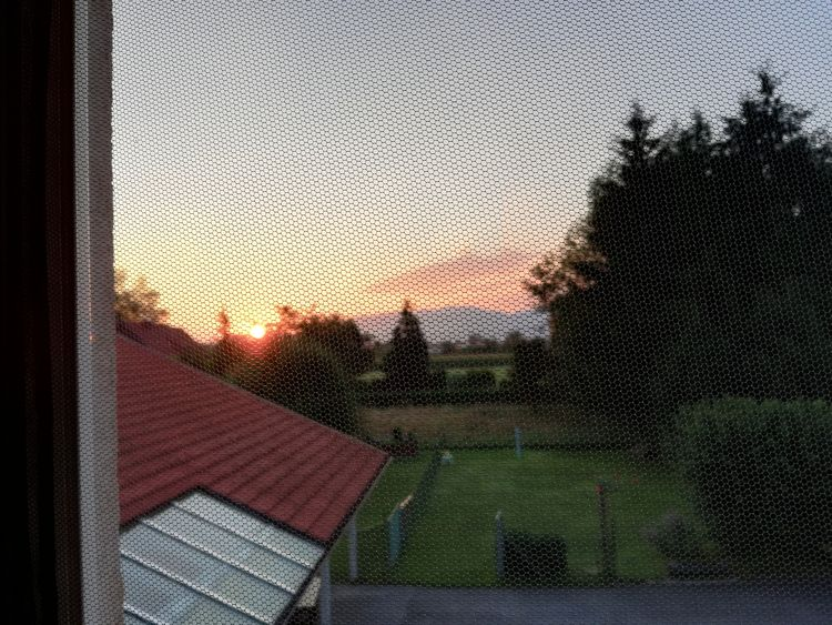 Sun coming happy window day - sanflower | ello