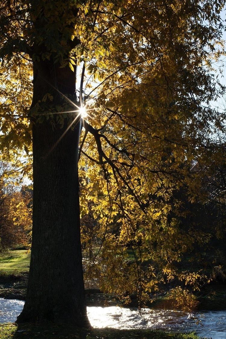 Tree creek stuff. Union Mills H - vujadav17 | ello