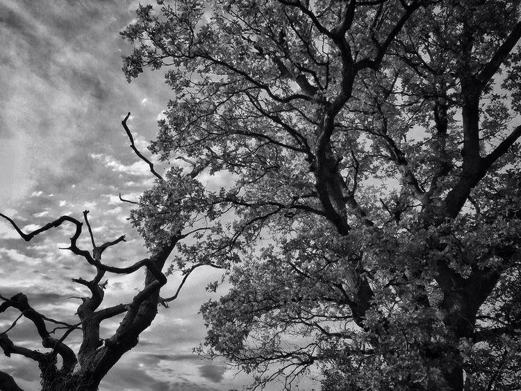 Dead Alive - photography, autumn - davidhawkinsweeks | ello