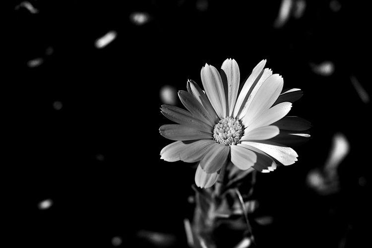 Botanical Monochrome 5593 - flowerphotography - dorian-stretton | ello