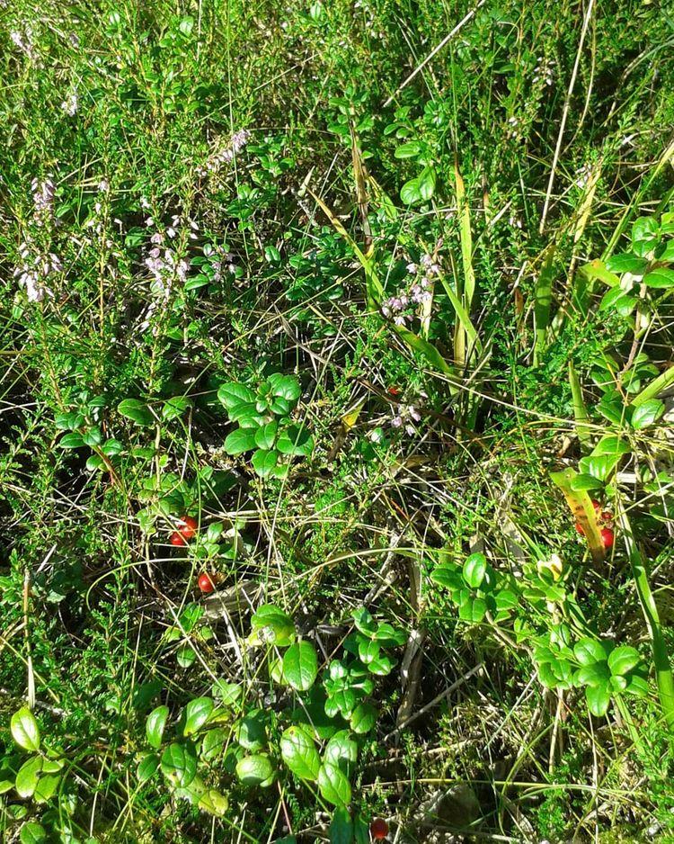 Färgkvalkad på Hovshaga Begravn - skogskyrkogardar | ello