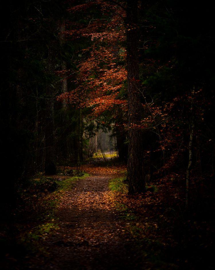 morning walk - nature, natureart - peter_skoglund | ello