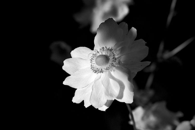 Botanical Monochrome 5611 - flowerphotography - dorian-stretton   ello