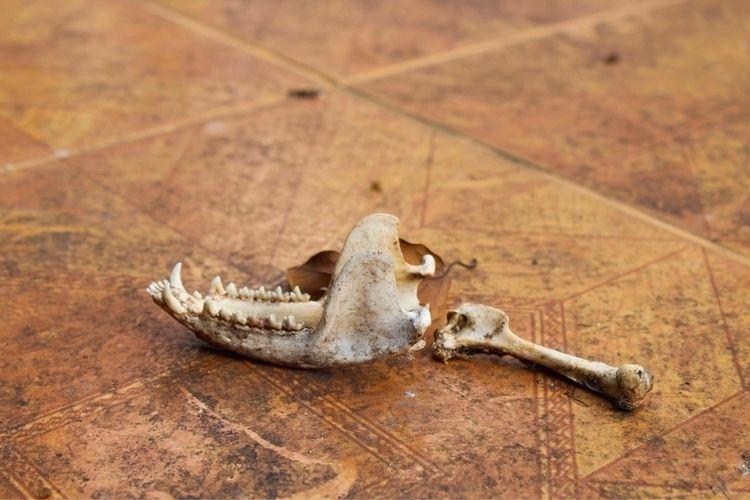 IV, 2018 - photohraphy, bones, death - chandelierbensberg | ello