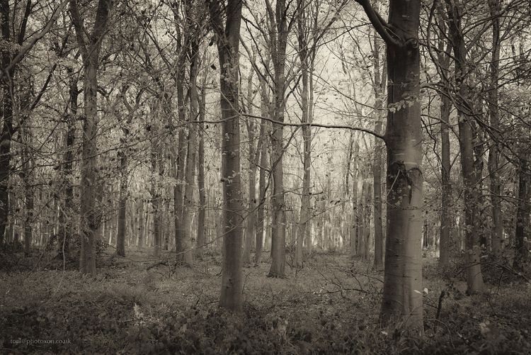 Shears copse. Woodstock, UK 201 - toni_ertl | ello