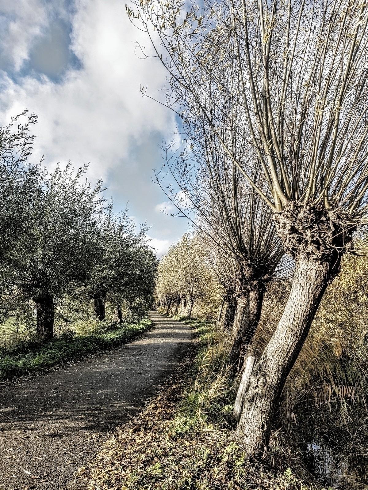 Today nice walk noticed road tr - rvdkimmenade   ello
