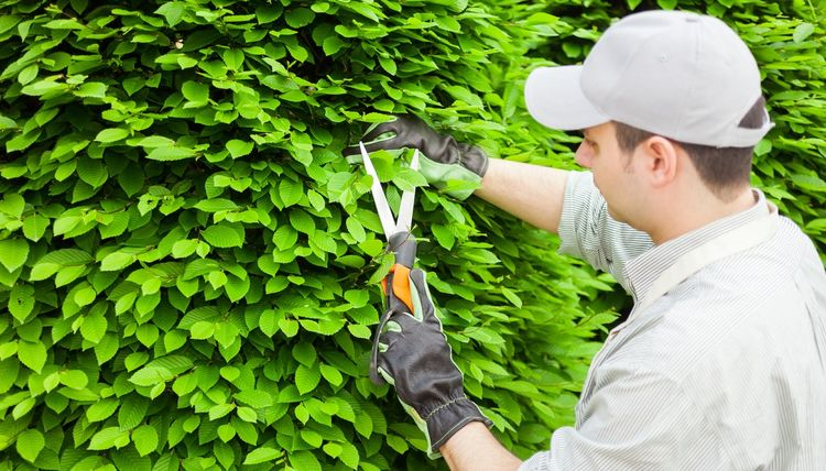 tree trim prune trees, remove o - chriss974 | ello