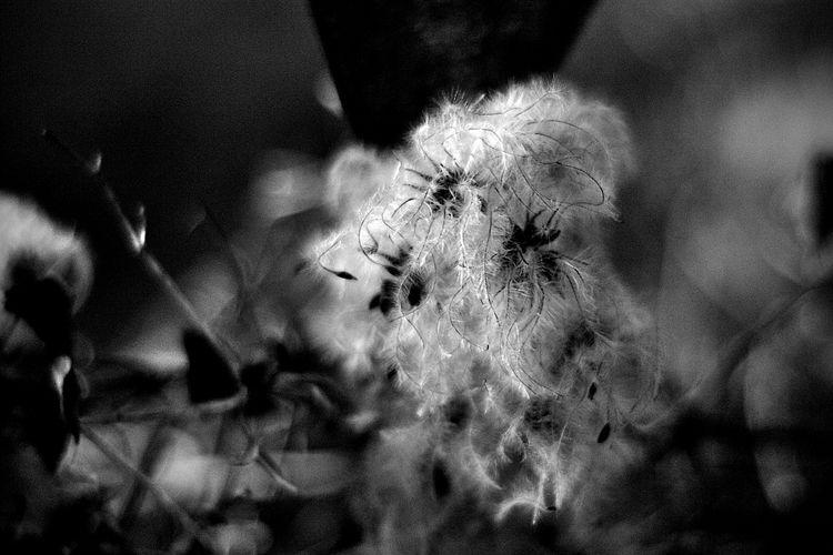Botanical Monochrome 5634 - flowerphotography - dorian-stretton | ello