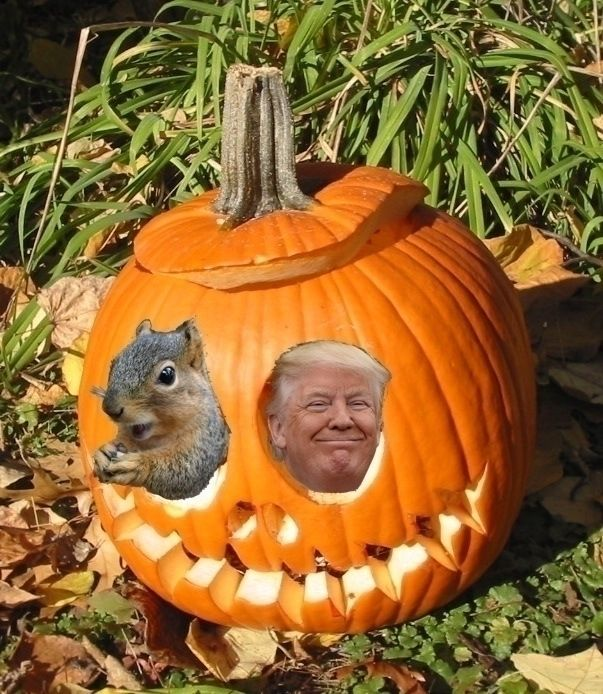 Squirrels fun pumpkin - Hidey_Hole - ccruzme | ello