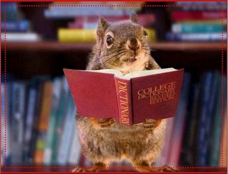 Squirrel Scat. Yesterday, shove - ccruzme | ello