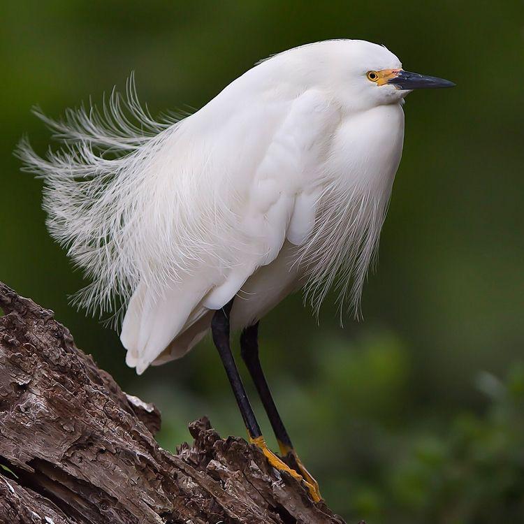 Fantastic Bird Photography Jeff - photogrist | ello