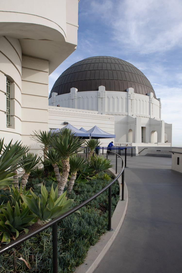Plants, Griffith Observatory, L - odouglas | ello