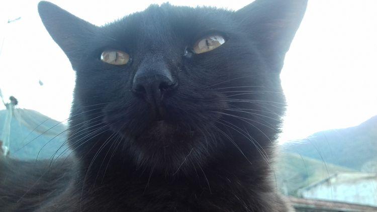 Black cat - edumetal   ello