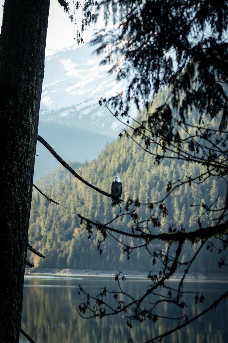 Baker Lake. Mt Baker, WA - ericbird | ello