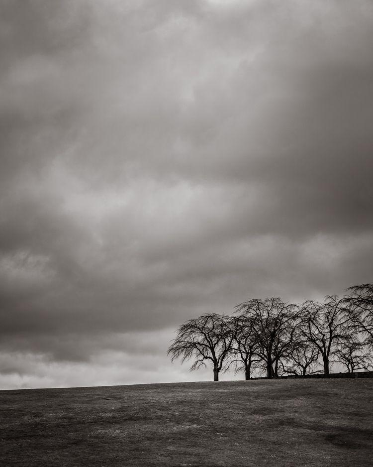 grey - nature, natureart, trees - peter_skoglund | ello