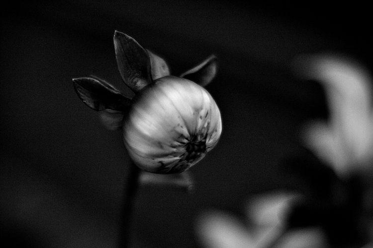 Botanical Monochrome 5661 - flowerphotography - dorian-stretton | ello