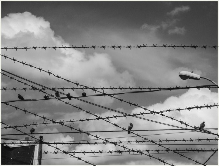 Barbed wire - collage, photography - franalvez | ello