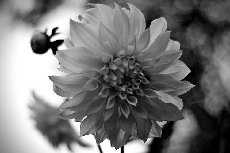 Botanical Monochrome 5662 - flowerphotography - dorian-stretton | ello