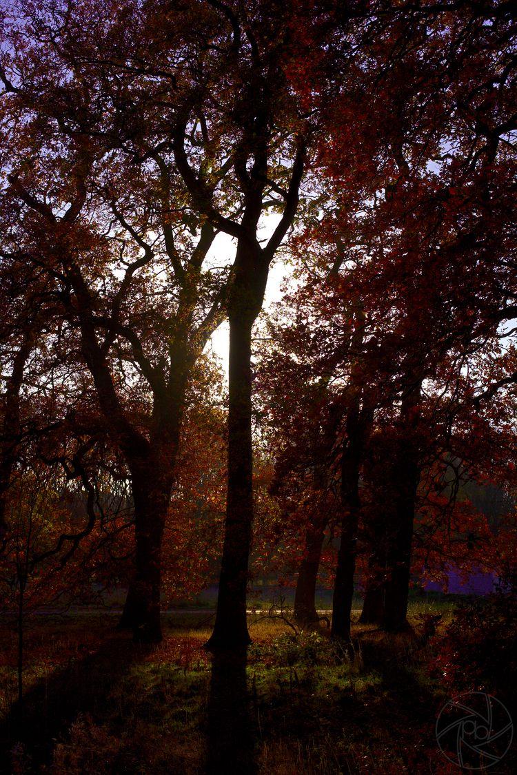 Autumn Colours - trees, sunshine - pdjbarber | ello