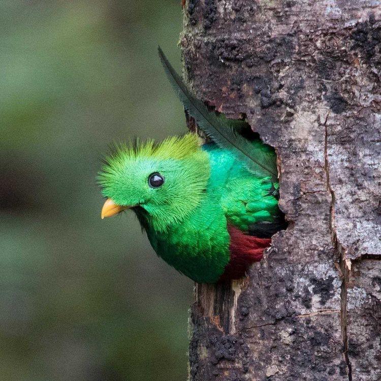 Beautiful Bird Photography Alej - photogrist | ello