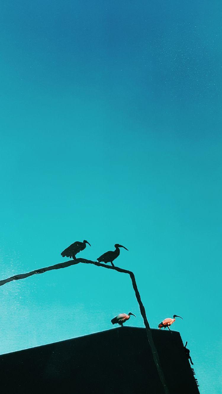 couple separated time eye wings - nodjadong | ello