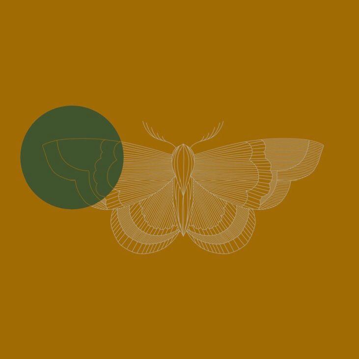Moth - illustration, illustrator - margoshmargo | ello
