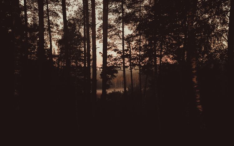 forest, lithuania, september - beheroght | ello