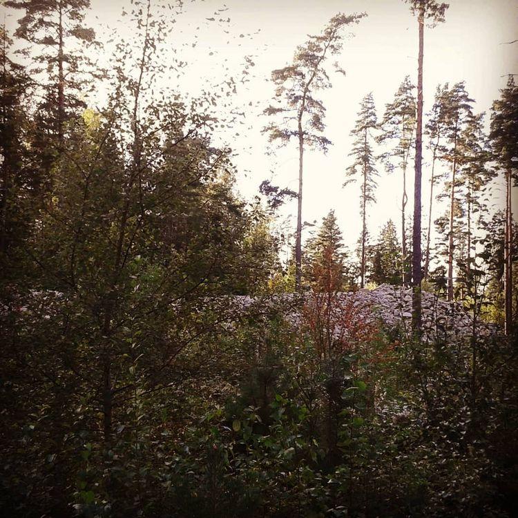 Röse utan grav... ... från Nuti - skogskyrkogardar | ello