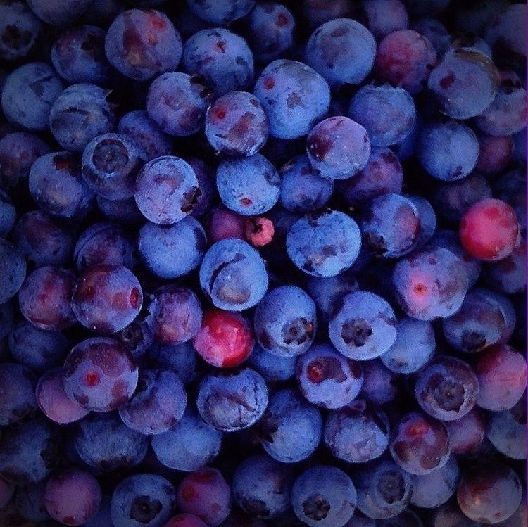 Blueberries - photo, blue, wild - dispel | ello